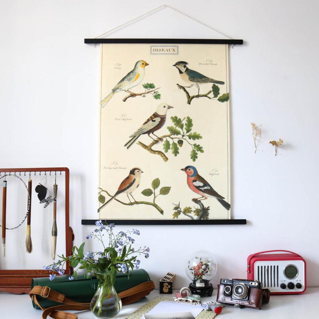 affiche naturaliste oiseaux